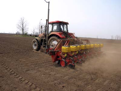 gajenje kukuruza