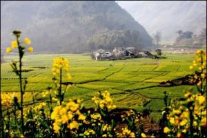 proizvodnja uljane repice